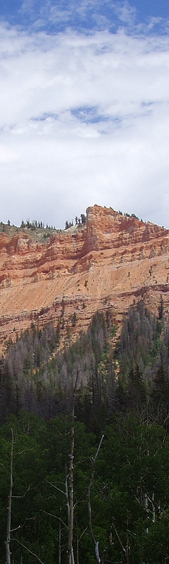 Along the Road to Cedar Breaks